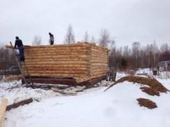 Строительство из зимнего леса - отличный для вас вариант