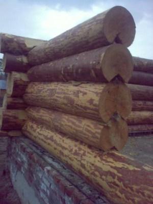 Межвенцовый утеплитель в проекте дома из бревна ручной рубки