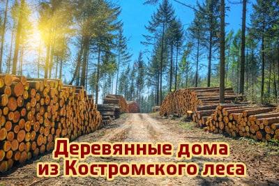 Костромской лес: преимущества северной древесины