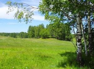 Очаровательные пейзажи одного из поселка по Алтуфьевскому шоссе. Это прекрасное место для семейного отдыха в экологически чистом районе, но не слишком далеко от столицы