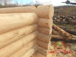 """Угол деревянного дома из бревна, собранный """"в чашу"""""""