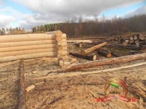 Чухломской край богат качественной и чистой древесиной