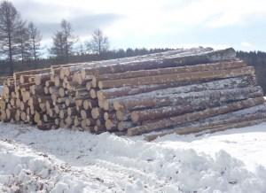 Строения из такой древесины будут служить вам не менее века