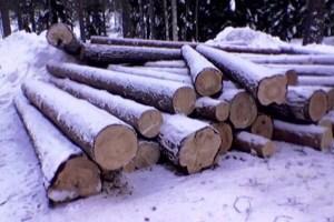 Заготовка леса в Костромской области происходит как в теплое время года, так и суровой зимой
