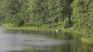 Отдыхая в деревянном домике в этом районе, вы найдете много рек, спрятанных в лесной глуши. И тем не менее здесь оборудованы купальные зоны для вашего отдыха