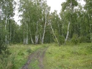 Поселки на Щелковском шоссе - это непроходимые тропы среди густых лесов. Именно здесь можно отдохнуть вдали от городской суеты в деревянном домике